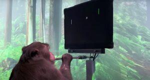 neuralink monkey pong brain